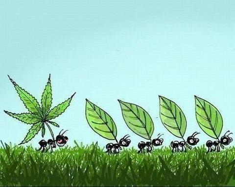 Свезло муравью