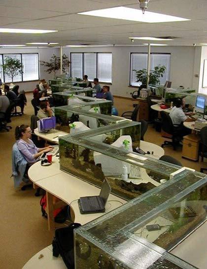 В нашем офисе нет стресса