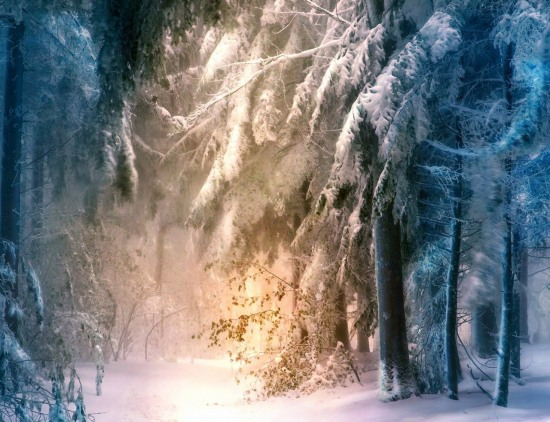 Чудесный зимний лес
