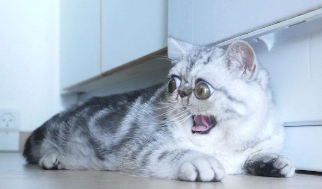 Испуг кота