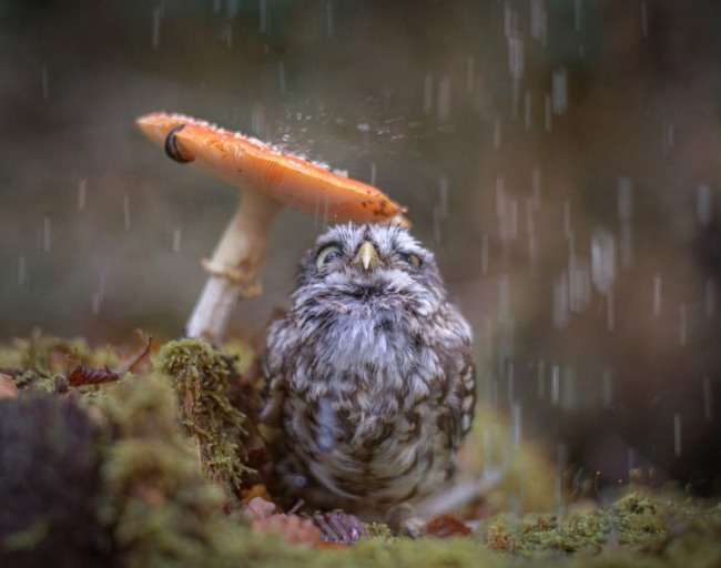 Грибок спасает от дождя