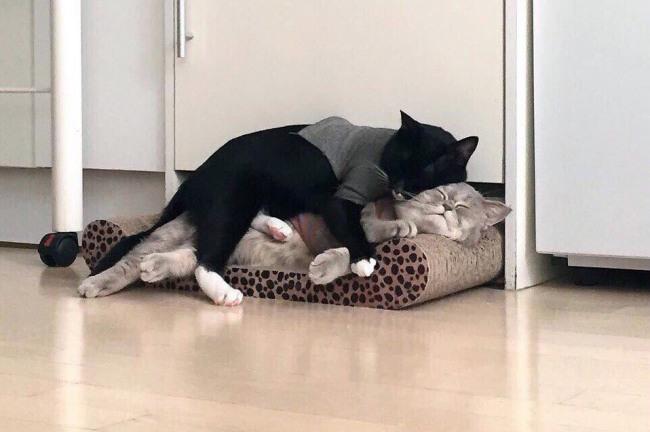 Кот это лучшая подушка, особенно для другого кота