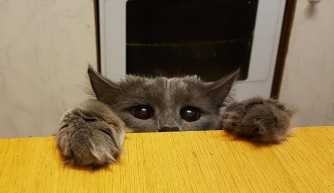 Покорми кота
