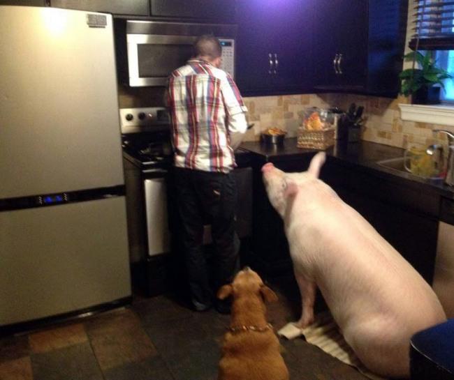 Домашние любимцы в ожидании ужина