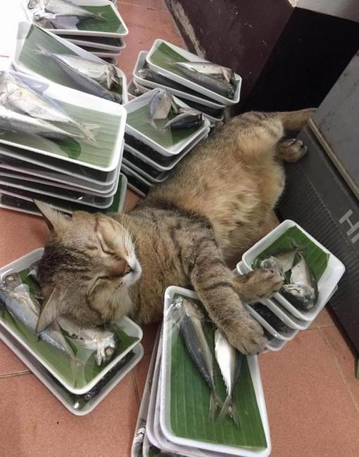 Коту счастье привалило