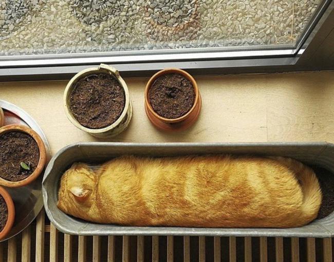 Кот прикинулся рассадой