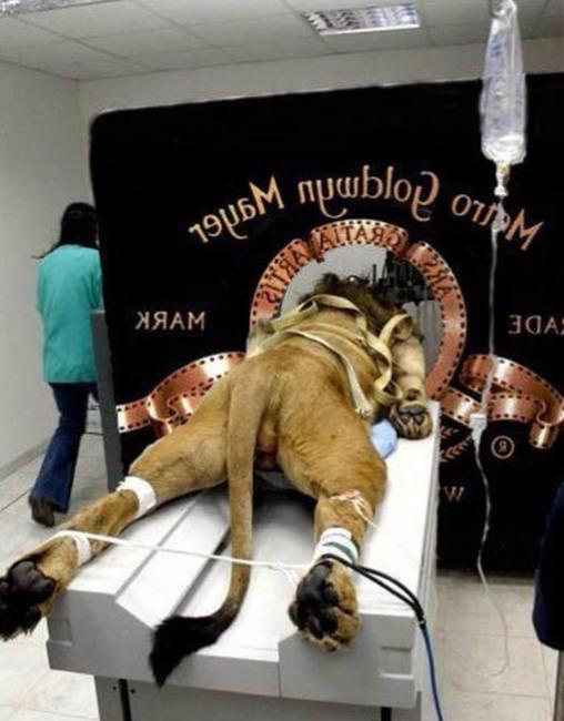 Так снимали знаменитую заставку Metro-Goldwyn-Mayer