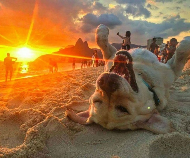 Собачья радость на закате дня