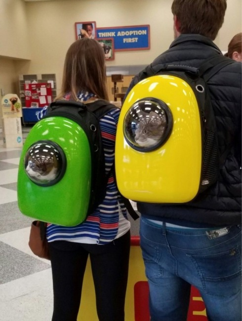 Рюкзаки для перевозки котов