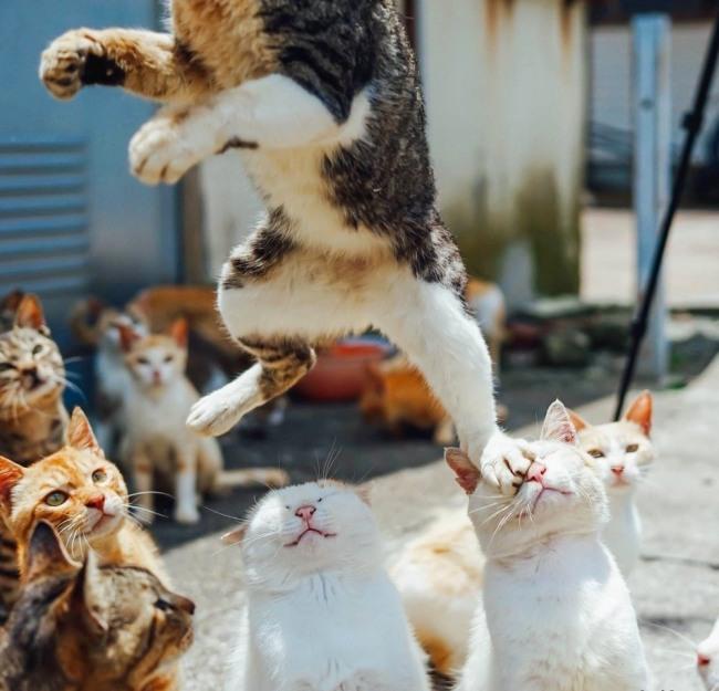 Карьерное продвижение у котов выглядит так же как и у людей