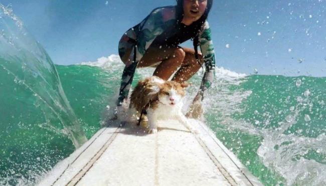Серфинг с любимым котом