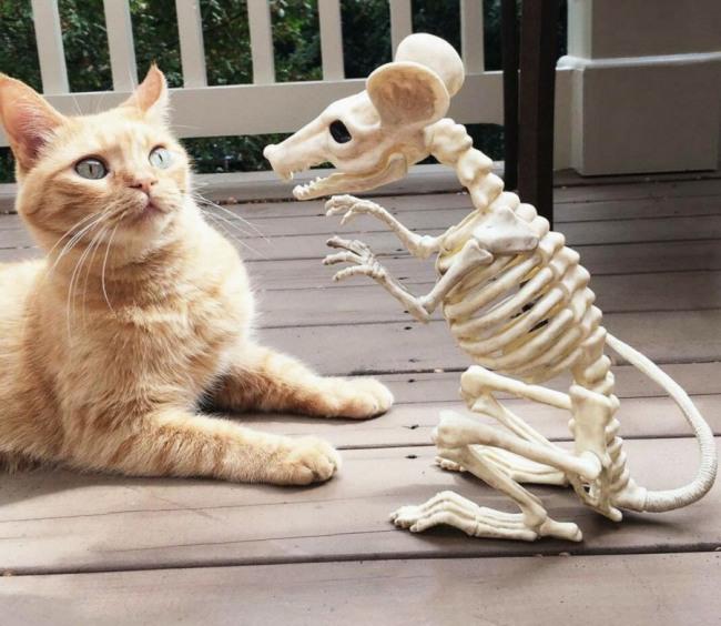 Кот испугался мыши