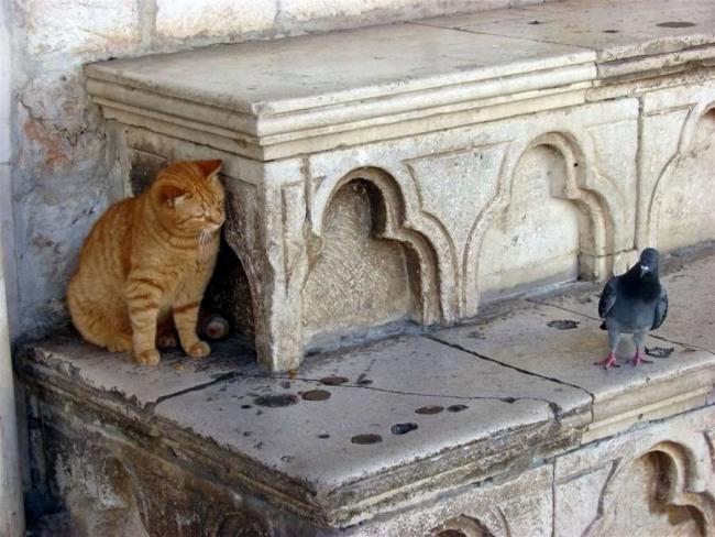 Кот в засаде