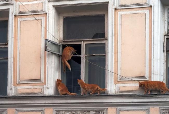 Котики возвращаются с прогулки