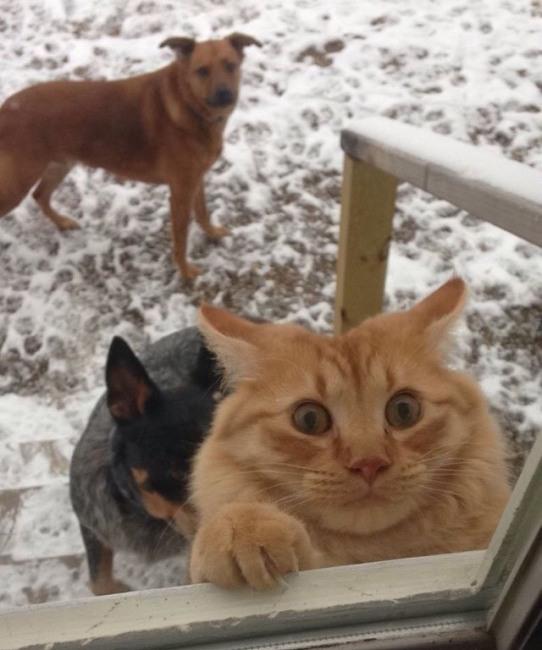 Спасите кота!