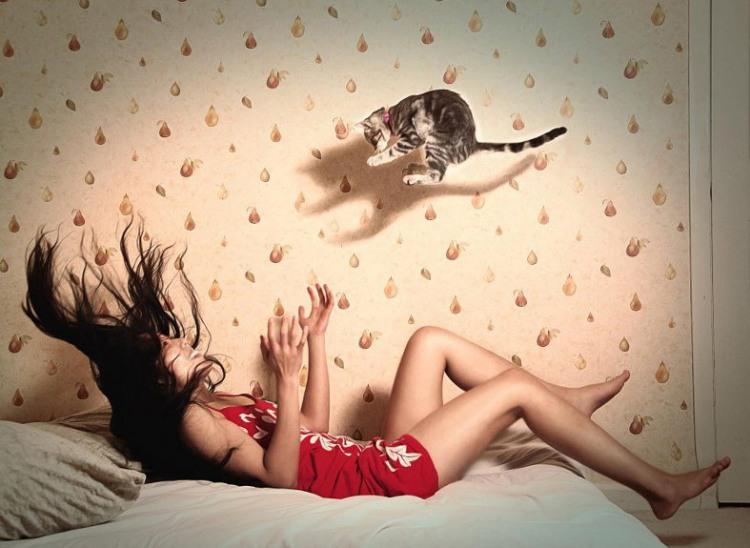 Лови котенка