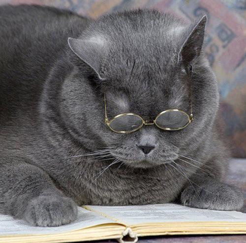 Кот ученый