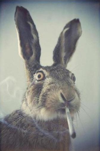 На поляне траву, зайцы в полночь косили ...