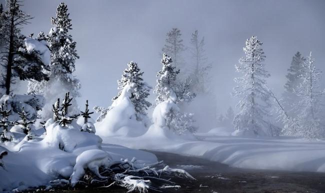 Елки в снегу