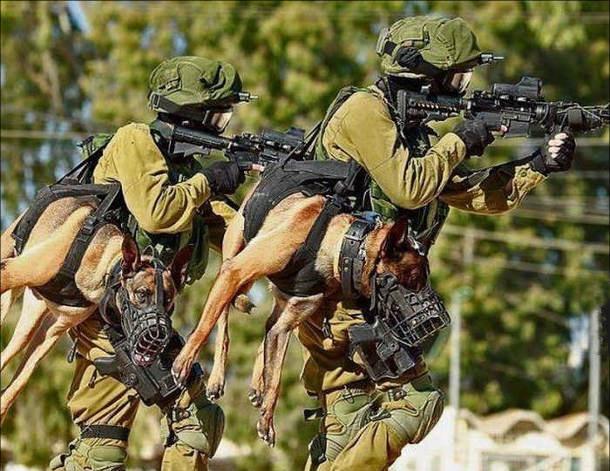 Спецназовцы с собаками