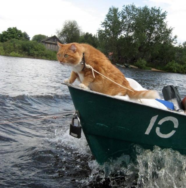 Взял с собой кота на рыбалку
