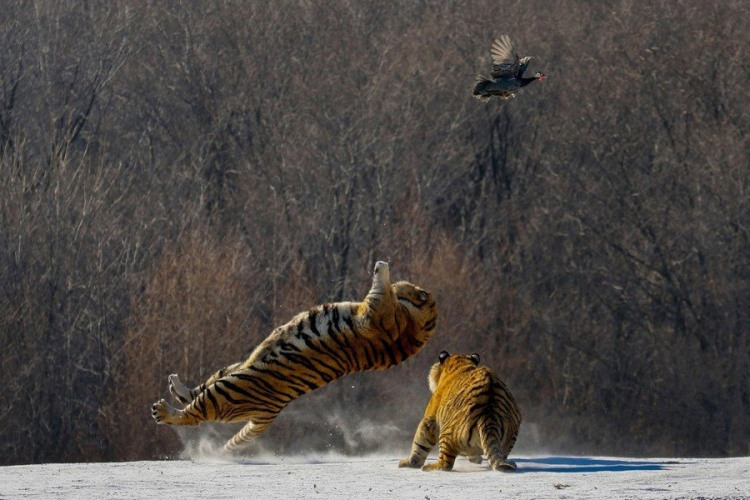 Охота на куропатку