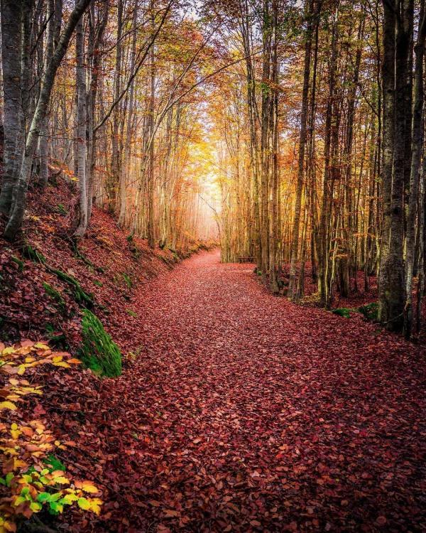 Сказочный осенний лес