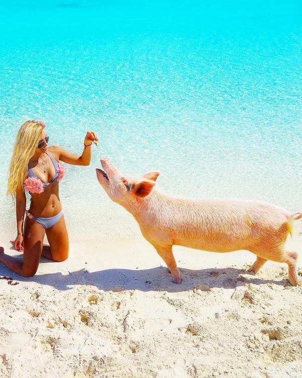 Девушка со своей любимой свинкой на пляже