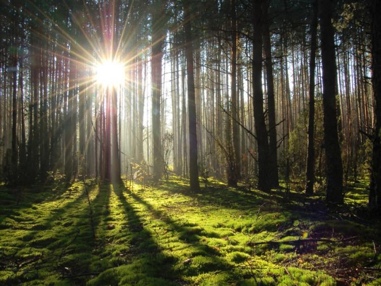 Лучик света в лесу