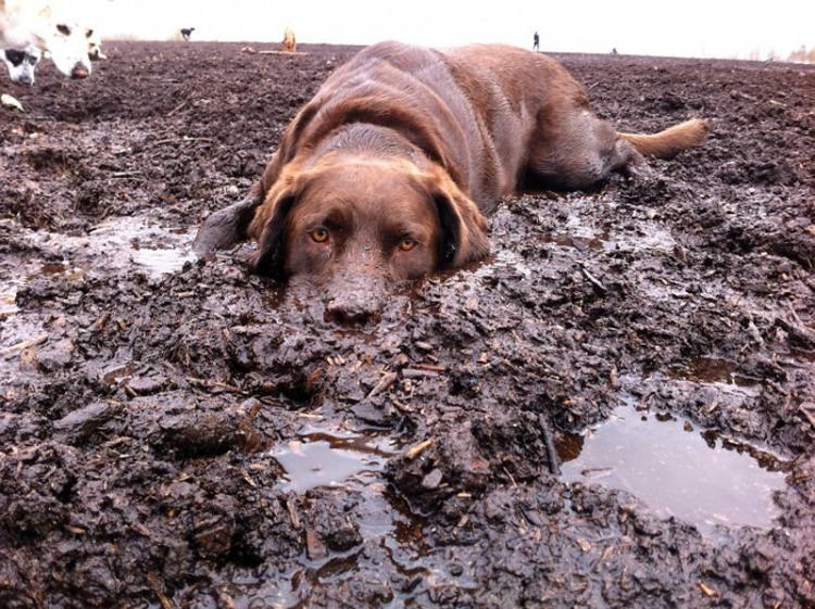 Расслабляющая грязь