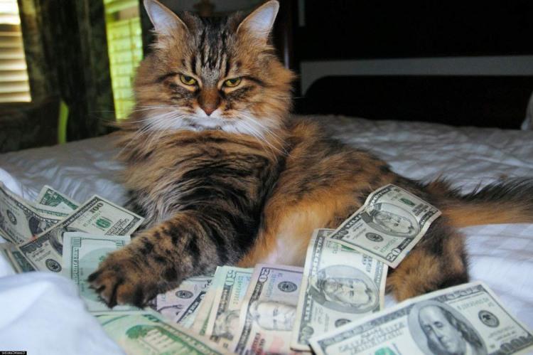 Богатый кот