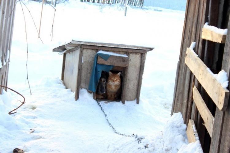 Общая будка для кота и собаки