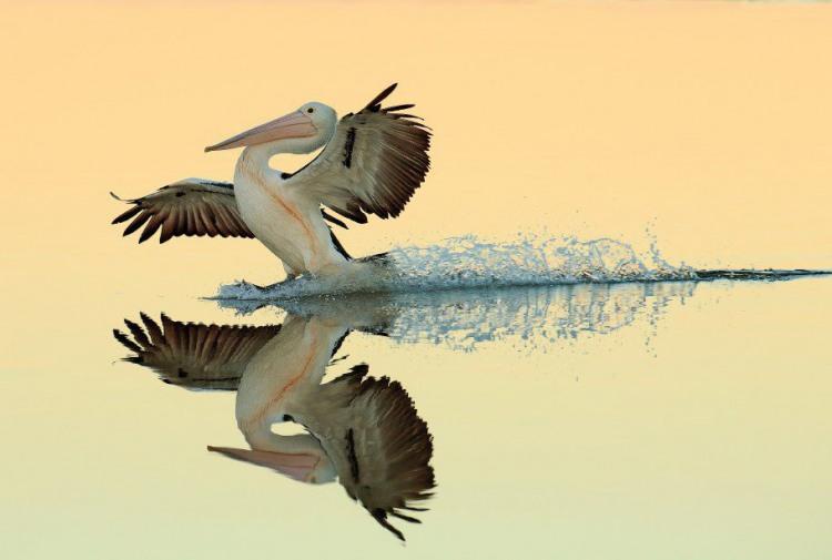 Посадка на зеркальное озеро
