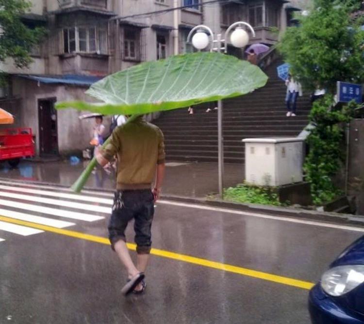 Лист вместо зонтика