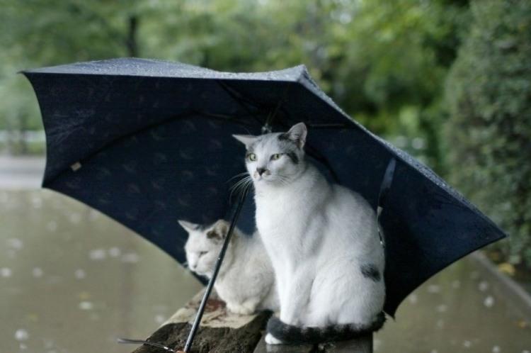 Коты спрятались под зонтиком