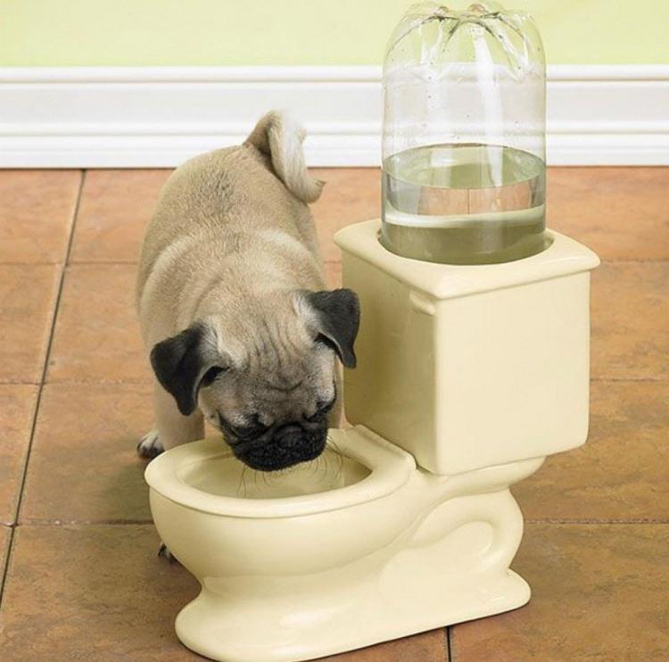 Унитаз-поилка для собак