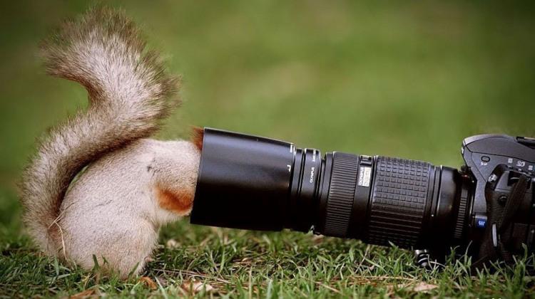 Белка в поисках фотографа