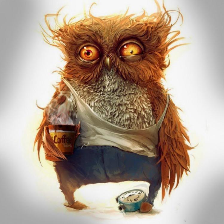 Сова напилась кофе