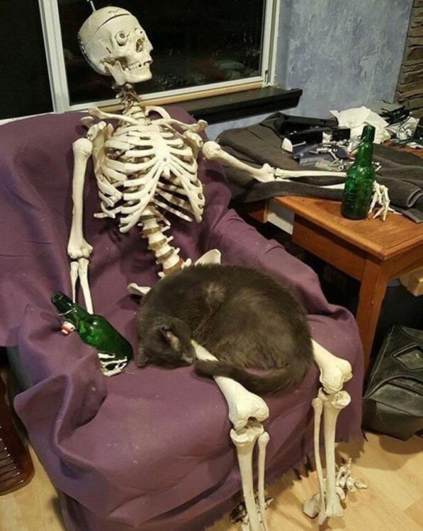 Хозяин сбухался и кот остался сам
