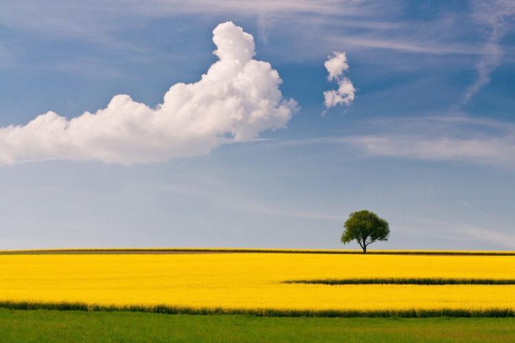 Желтые цветы - символ одиночества