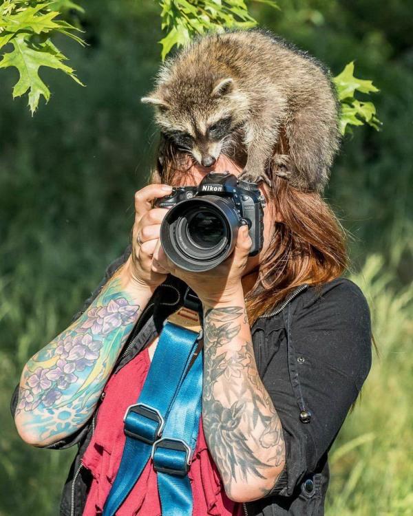 Енот помощник фотографа