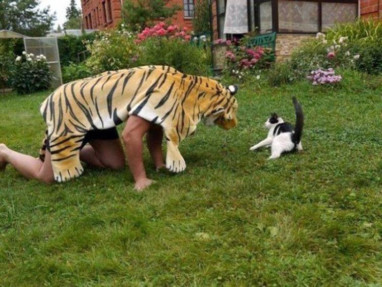 Эффективный способ напугать кота