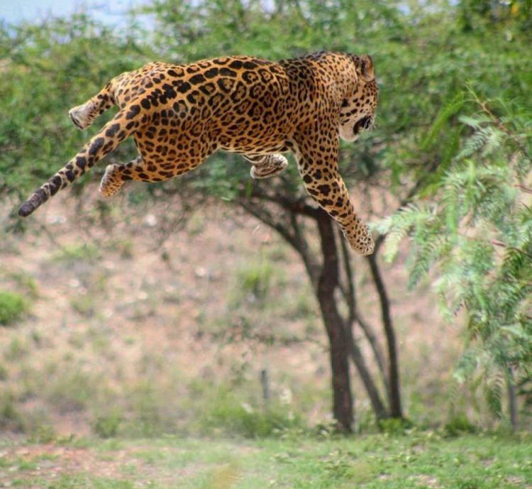 Мега прыжок