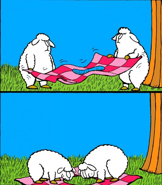 Овцы на пикнике