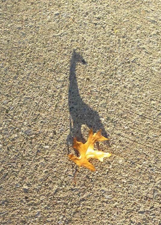 Тень жирафа от листика