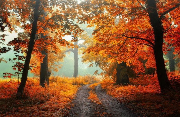 Осенняя дорога в лесу