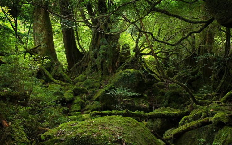 Ярко выраженное направление на север в лесу