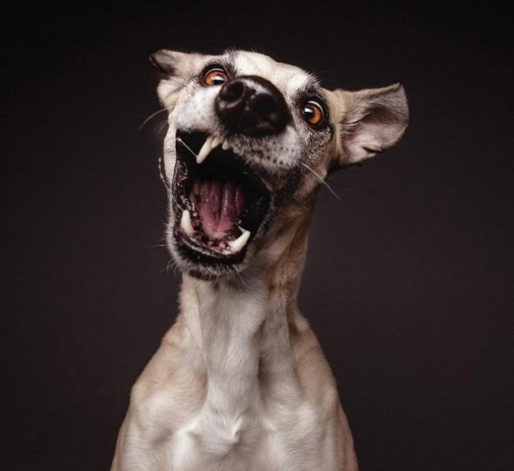 Пса колбасит