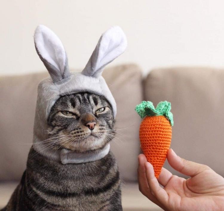 Морковка для моего зайки