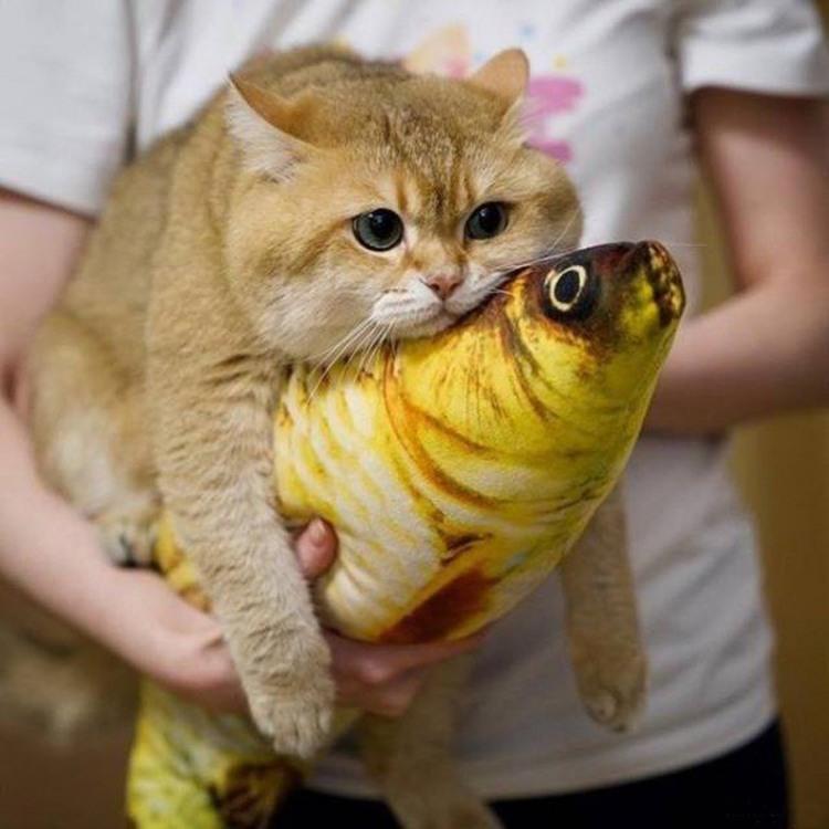 Кот отдыхает на рыбе